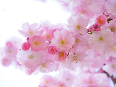 flowers-324175_1280